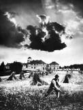 c.  1910 - Harvest