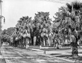 c. 1910 - Palm trees on St. Charles Avenue