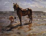 1905 - Bathing a horse
