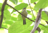 Forest Elania  0616-1j  Darien
