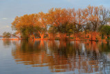 Trees in West Zwicks Park reflected in the Bay of Quinte