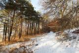 Balade hivernale sur le GR 11 le long de l'Aubette près de Magny en Vexin