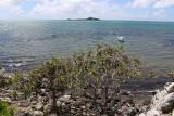 427 - Vacances ile Rodrigues janvier 2017 - IMG_2406_DxO Pbase.jpg
