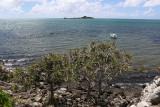 428 - Vacances ile Rodrigues janvier 2017 - IMG_2407_DxO Pbase.jpg