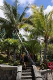 463 - Vacances ile Rodrigues janvier 2017 - IMG_2435_DxO Pbase.jpg