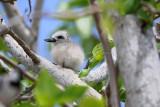 Ile Rodrigues - Une journée dans la réserve ornithologique de l'île Coco
