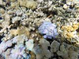 113 - Snorkeling ile Rodrigues janvier 2017 - GOPR5968 DxO Pbase.jpg