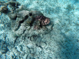 12 - Snorkeling ile Rodrigues janvier 2017 - GOPR5874 DxO Pbase.jpg