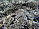 120 - Snorkeling ile Rodrigues janvier 2017 - GOPR5975 DxO Pbase.jpg
