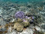 131 - Snorkeling ile Rodrigues janvier 2017 - GOPR5983 DxO Pbase.jpg
