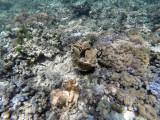 134 - Snorkeling ile Rodrigues janvier 2017 - GOPR5986 DxO Pbase.jpg