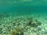 14 - Snorkeling ile Rodrigues janvier 2017 - GOPR5876 DxO Pbase.jpg