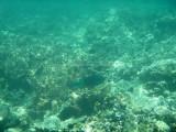 141 - Snorkeling ile Rodrigues janvier 2017 - P1010066 DxO Pbase.jpg