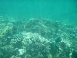 146 - Snorkeling ile Rodrigues janvier 2017 - P1010068 DxO Pbase.jpg