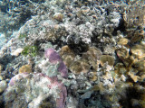 149 - Snorkeling ile Rodrigues janvier 2017 - GOPR5997 DxO Pbase.jpg