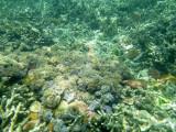 153 - Snorkeling ile Rodrigues janvier 2017 - P1010070 DxO Pbase.jpg