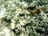 156 - Snorkeling ile Rodrigues janvier 2017 - P1010073 DxO Pbase.jpg