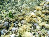158 - Snorkeling ile Rodrigues janvier 2017 - P1010075 DxO Pbase.jpg