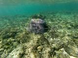 16 - Snorkeling ile Rodrigues janvier 2017 - GOPR5878 DxO Pbase.jpg