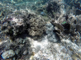 161 - Snorkeling ile Rodrigues janvier 2017 - GOPR6002 DxO Pbase.jpg