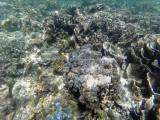 164 - Snorkeling ile Rodrigues janvier 2017 - GOPR6005 DxO Pbase.jpg