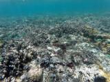 167 - Snorkeling ile Rodrigues janvier 2017 - GOPR6008 DxO Pbase.jpg