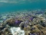 168 - Snorkeling ile Rodrigues janvier 2017 - GOPR6009 DxO Pbase.jpg