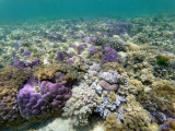 169 - Snorkeling ile Rodrigues janvier 2017 - GOPR6010 DxO Pbase.jpg