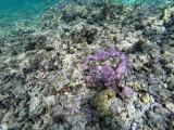 22 - Snorkeling ile Rodrigues janvier 2017 - GOPR5884 DxO Pbase.jpg