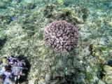 28 - Snorkeling ile Rodrigues janvier 2017 - GOPR5890 DxO Pbase.jpg