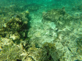 31 - Snorkeling ile Rodrigues janvier 2017 - GOPR5893 DxO Pbase.jpg