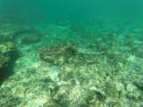 32 - Snorkeling ile Rodrigues janvier 2017 - GOPR5894 DxO Pbase.jpg