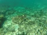 33 - Snorkeling ile Rodrigues janvier 2017 - GOPR5895 DxO Pbase.jpg