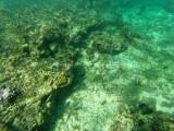 34 - Snorkeling ile Rodrigues janvier 2017 - GOPR5896 DxO Pbase.jpg