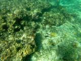 35 - Snorkeling ile Rodrigues janvier 2017 - GOPR5897 DxO Pbase.jpg