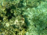 36 - Snorkeling ile Rodrigues janvier 2017 - GOPR5898 DxO Pbase.jpg