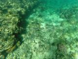 42 - Snorkeling ile Rodrigues janvier 2017 - GOPR5904 DxO Pbase.jpg