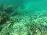 47 - Snorkeling ile Rodrigues janvier 2017 - GOPR5909 DxO Pbase.jpg