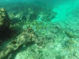 48 - Snorkeling ile Rodrigues janvier 2017 - GOPR5910 DxO Pbase.jpg