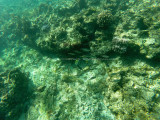 53 - Snorkeling ile Rodrigues janvier 2017 - GOPR5915 DxO Pbase.jpg