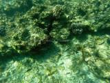 54 - Snorkeling ile Rodrigues janvier 2017 - GOPR5916 DxO Pbase.jpg