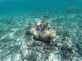 56 - Snorkeling ile Rodrigues janvier 2017 - GOPR5918 DxO Pbase.jpg