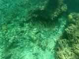 61 - Snorkeling ile Rodrigues janvier 2017 - GOPR5924 DxO Pbase.jpg
