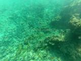 62 - Snorkeling ile Rodrigues janvier 2017 - GOPR5925 DxO Pbase.jpg