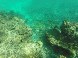 64 - Snorkeling ile Rodrigues janvier 2017 - GOPR5926 DxO Pbase.jpg