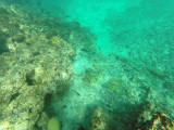 66 - Snorkeling ile Rodrigues janvier 2017 - GOPR5927 DxO Pbase.jpg