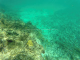 69 - Snorkeling ile Rodrigues janvier 2017 - GOPR5928 DxO Pbase.jpg