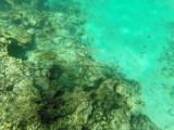 70 - Snorkeling ile Rodrigues janvier 2017 - GOPR5929 DxO Pbase.jpg