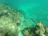 72 - Snorkeling ile Rodrigues janvier 2017 - GOPR5931 DxO Pbase.jpg