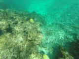 74 - Snorkeling ile Rodrigues janvier 2017 - GOPR5933 DxO Pbase.jpg